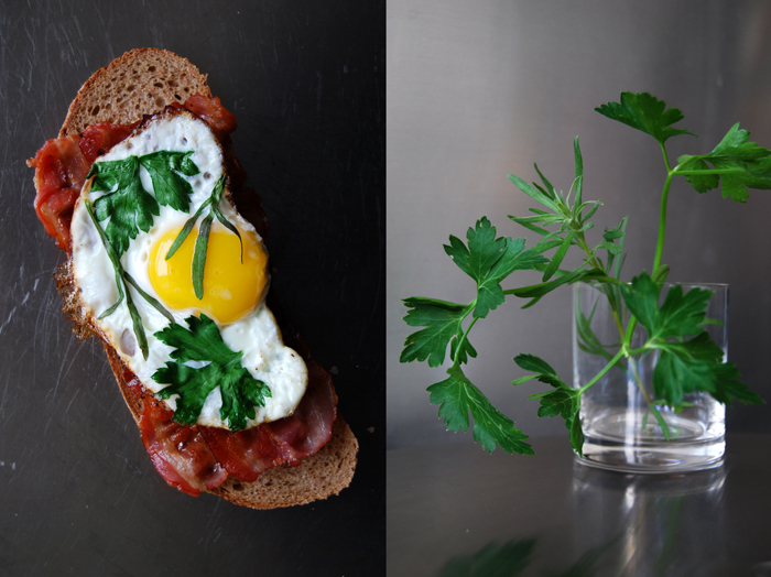Tarragon + Parsley Fried Egg + Bacon Sandwich