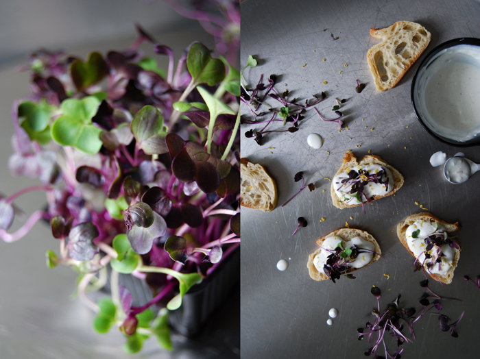 Lemon Goat Cheese Tartine with Sango Radish Sprouts